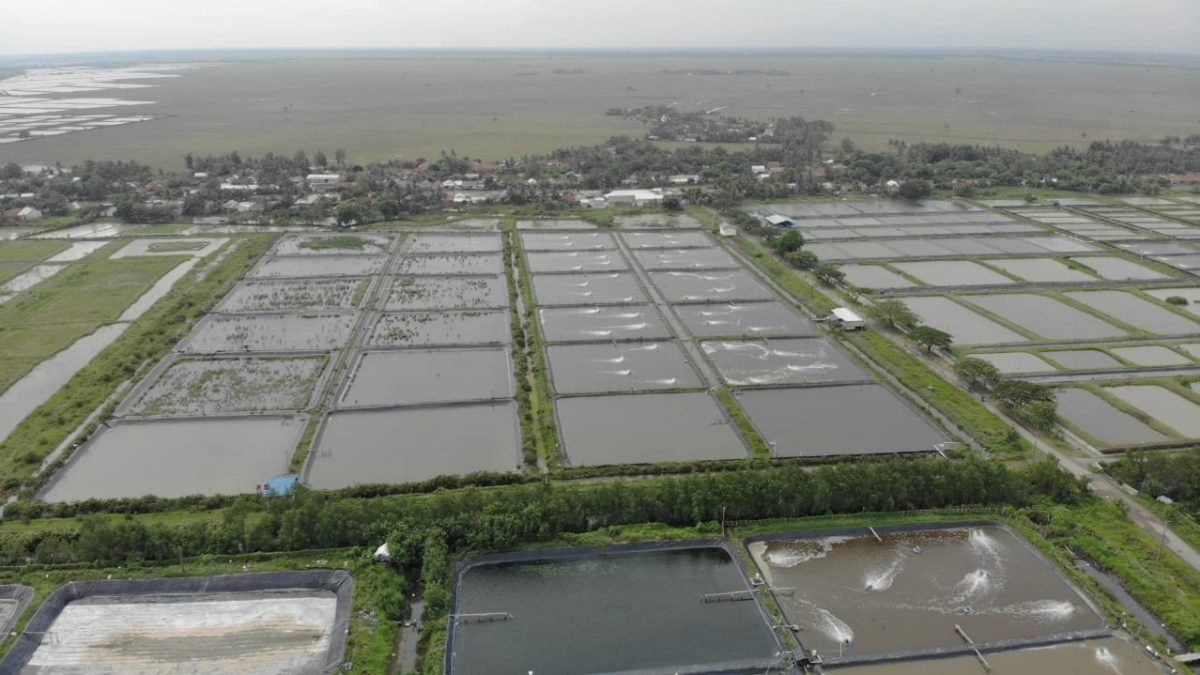 Sustainable Shrimp Aquaculture with Environmental Control